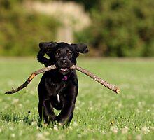 I Found A Stick! by Misti Love