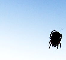 Web Spinning by Ashley Espolt