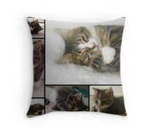 The Many Faces Of Rascal Throw Pillow