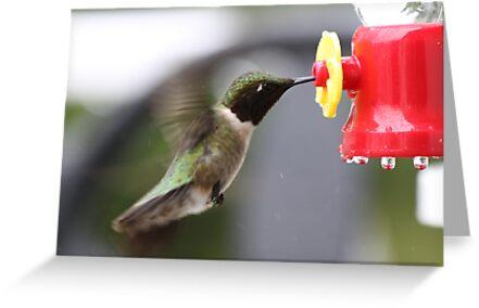 HUMMINGBIRD  #1 by gypsykatz