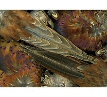 Feather Dance Photographic Print