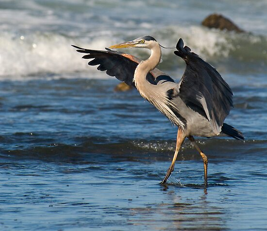 Great Blue Heron by Leroy Laverman