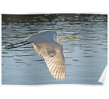 Egret and Sun Poster