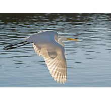 Egret and Sun Photographic Print
