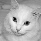 Up Close and Perrrsonal by Megs D