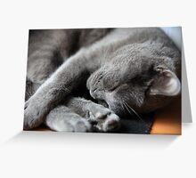 Let me sleep Greeting Card