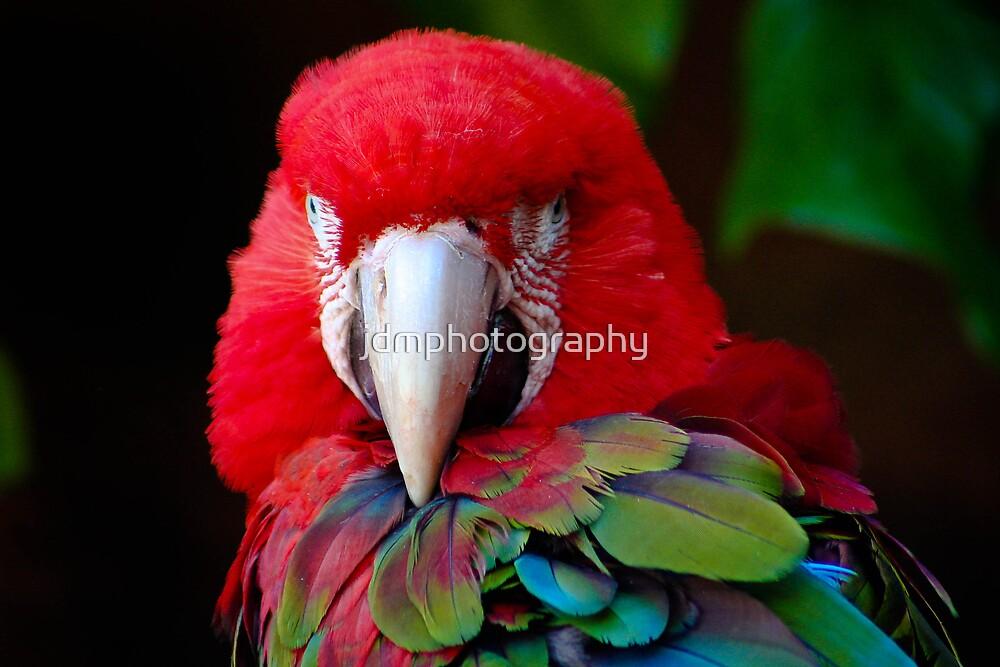 Parrot Portrait .......  by jdmphotography