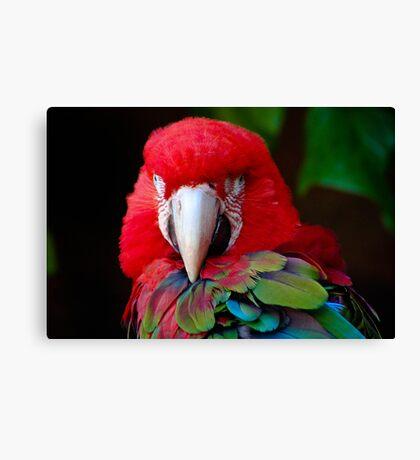 Parrot Portrait .......  Canvas Print