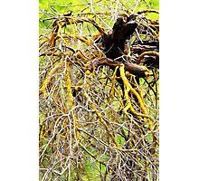 Yellow Branches Photographic Print