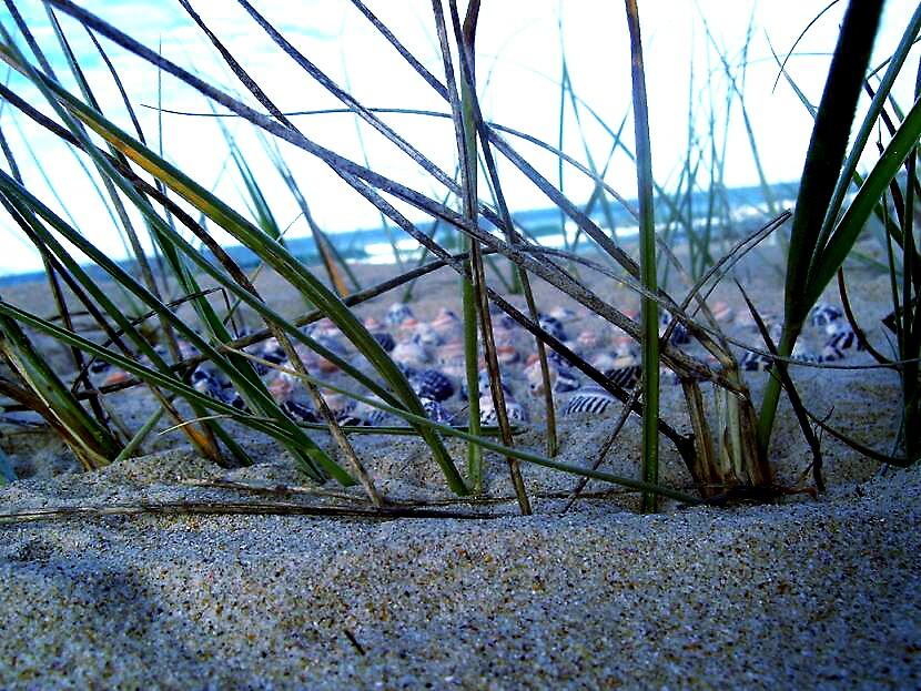 fence by naomiinreality