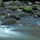 Water, Stones & Moss by Bill Spengler
