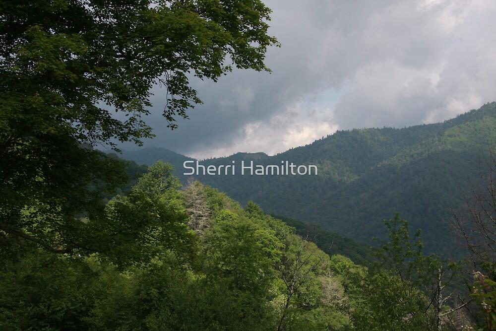 Storm's a Brewing by Sherri Hamilton