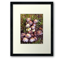 The Little Mushroom Patch Framed Print