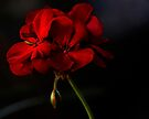 Pretty In Red by Larry Costales