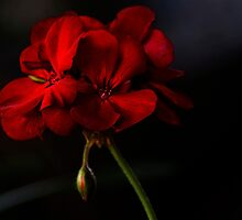 Pretty In Red by Larry3