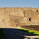 King John's castle, Carlingford Co, Louth. by Finbarr Reilly