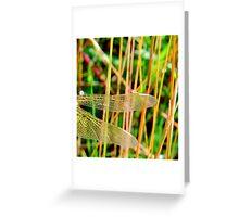 Gossamer Wings... Greeting Card