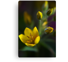 Yellow parade (from wild flowers collection) Canvas Print
