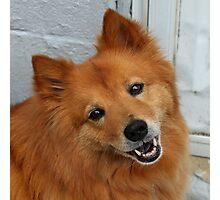 'Happy Dog 2' Photographic Print