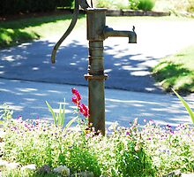 Old water pump with a new use by William Sanford
