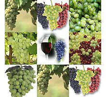 Just Grapes Photographic Print
