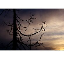 Gloaming Photographic Print