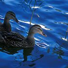 Pair of Ducks by Jim Haley