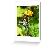 butterfly on a wild lily Greeting Card