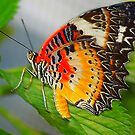 orange and yellow butterfly by kellimays