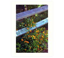 Fenced Flowers Art Print