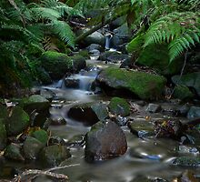 Myrtle Gully by Marc Bester
