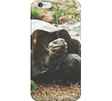 Galapagos Turtle iPhone Case/Skin