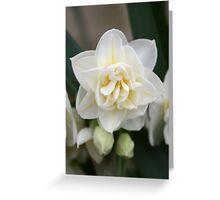 Spring Bloom Greeting Card