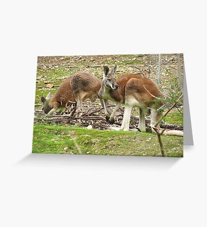 Red Kangaroos Greeting Card