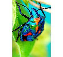 A Bug's Life Photographic Print