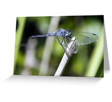 Blue Skimmer Greeting Card