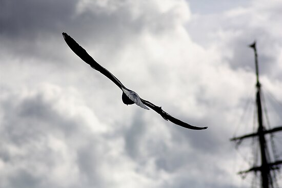 Bird In Flight by Ancient Ship  by Lynn Ede