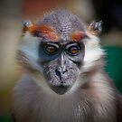 Cherry-crowned mangabey ........ by jdmphotography