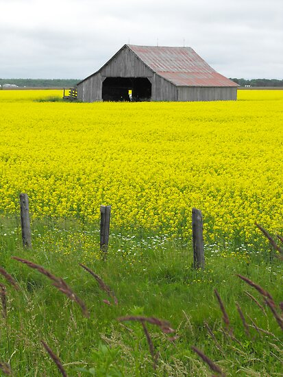 Fields Of Gold by Tracy Faught