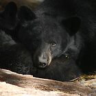 Protective Mama Bear by marilynwood