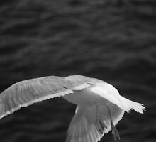 Take Off by will032890