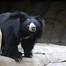 Sloth Bear by Anne Smyth