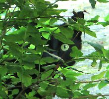 CAT IN HIDING by gothgirl