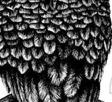 Hand Drawn Owl Sticker