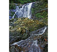 Dorrigo National Park... Photographic Print