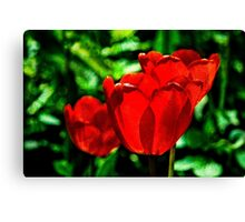 Red tulip flowers Canvas Print