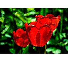 Red tulip flowers Photographic Print