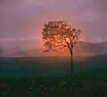 Foggy Rise by Neophytos