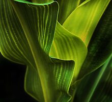 corn stalk by lastgasp