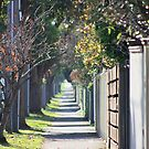 pathway to the burbs by Karen E Camilleri